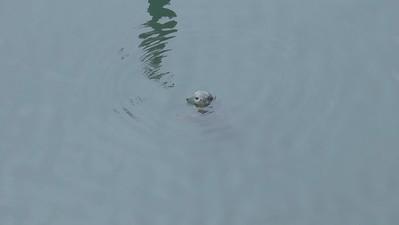 seal June