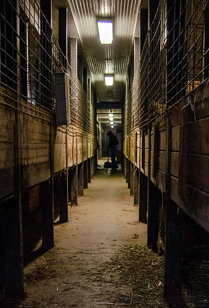 VL 101220 Equine Stall hallway