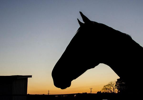 VL 101220 Equine Sunrise