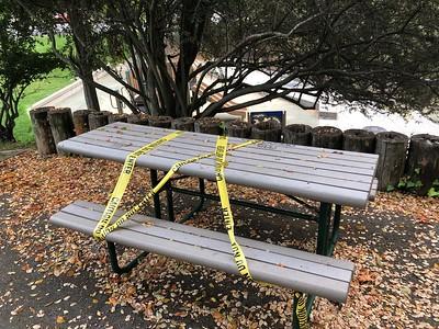 Dorothy Bolte Park Berkeley  by Nancy Rubin