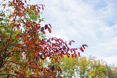 Fall Season-08734