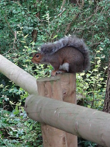 We went for a short forest walk to a hilltop fortress - and encountered this inquisitive squirrel!