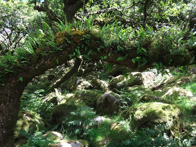 Wistmans Wood moss