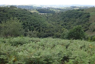 Teign Gorge view