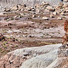 Petrified Forest National Park landscape