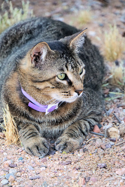 Cat on the trail