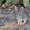 Rabbit on the trail