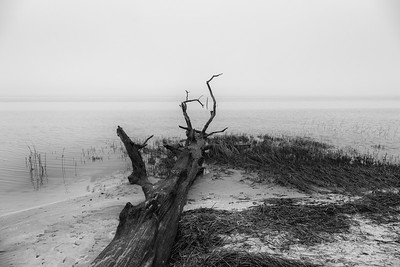 York River Coastline Fog