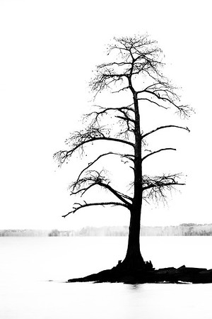 Tree on Jamestown Beach