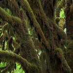 """""""Moss Monster"""""""