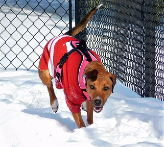DA104,DJ,Run Rosie RUN! What happiness looks like for a Rescue  Dog  Thank you Dubuque Humane Society!