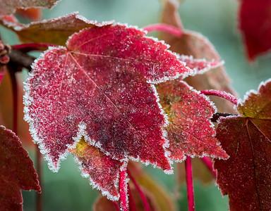 DA022,DN,sugar coated autumn