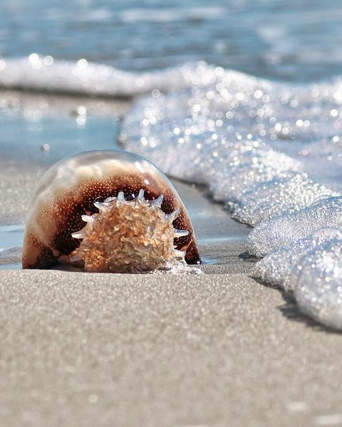 Jelly Fish on Beach