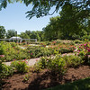 Delaware Park rose garden and Hoyt Lake near SUNY Buffalo State College.