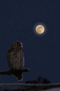 DA054,DA,Owl_with_Full_Moon
