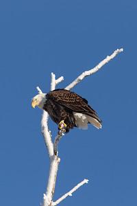 DA054,DN,Eagle's_Frosty_Perch