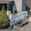 210408 Enterprise 2<br /> James Neiss/staff photographer <br /> Wilson, NY - Watch Dog - Winston the dog keeps a keen eye on things as Luanne Barbalate paints their West Lake Road picket fence in Wilson.
