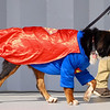 SPCA event 3 092521