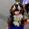 SPCA event 2 092521