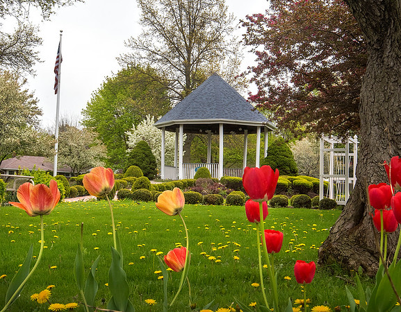 210503 Tulips 1<br /> James Neiss/staff photographer <br /> Lockport, NY - Tulips adorn the grounds at Children's Memorial Park plated by volunteers to honor the city colors and the Lockport City School District.<br /> <br /> From Ed Sandusky<br /> 716-434-2207<br /> Last fall the volunteers at the Children's Memorial Park at Lincoln & S. Transit decided to plant blue & gold tulips in the front garden along S. Transit St. First to display the city colors and to honor the Lockport City School District blue & gold groups who have had a chaotic year with split classes etc. but especially to recognize the senior classes of 2020 & 2021 because they missed so much of what the senior year of high school including the memories is all about. To them we say CONGRATULATIONS.<br /> The committee purchased the tulips thru the red bow sale which were on the tree throughout the holiday season. The other flowers throughout the park this summer were also purchased with funds from the red bow sale.  For all of the above we say THANK YOU LOCKPORT! It's great being a part of the community.