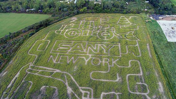 210920 Cambria Corn Maze