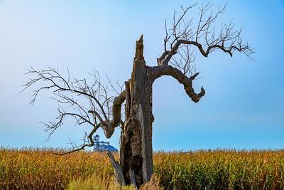 DA110,DP,Scary Tree at harvest
