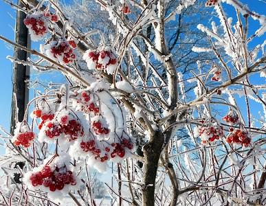 DA102,DP Red White & Blue Winter Hue