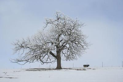 DA016,DP,Lone Tree