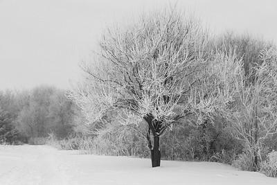 DA054,DB,Frosty_Cold_Morning