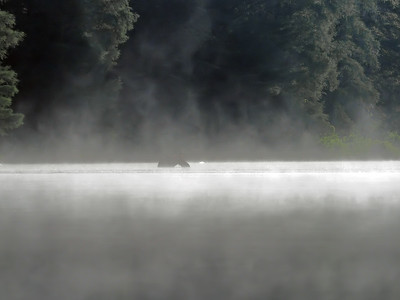 FIrst sighting of Mother in the thick lake mist Sunday morning. (c) 2021 Jim Chung