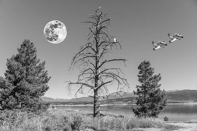 DA040,DA,Moon_Over_Colorado_Lake_Canadian_Snow_Geese_Iowa_Red_Tailed_Hawk