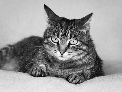 DA054,DB,Stripe Our Feral Cat