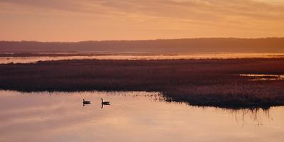 DA123,DN,Green Island geese