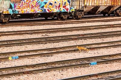 DA040,DN,Hobo_Fox_Walking_Rail_Yard_Nature_Impeding_on_Man