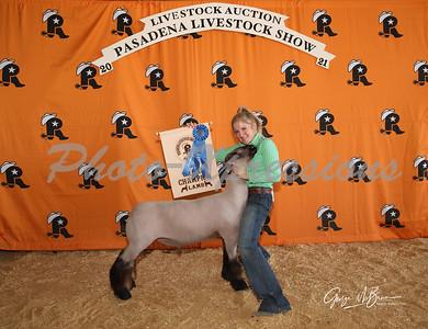 grand champion lamb_2593