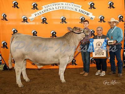grand champion steer_2800