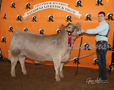 6th place steer_2816