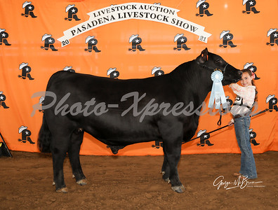 11th place steer_2830