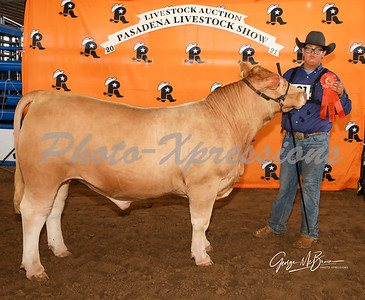 10th place steer_2827