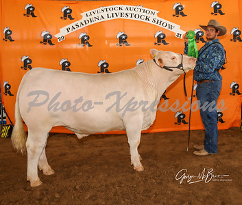 4rd place steer_2809
