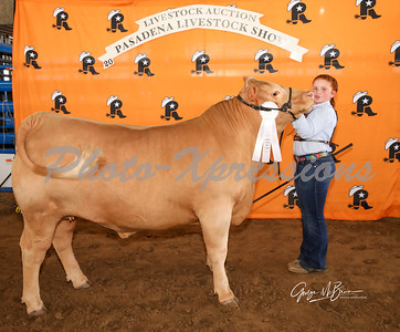 3rd place steer_2806