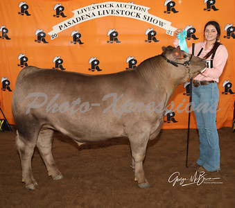 9th place steer_2821