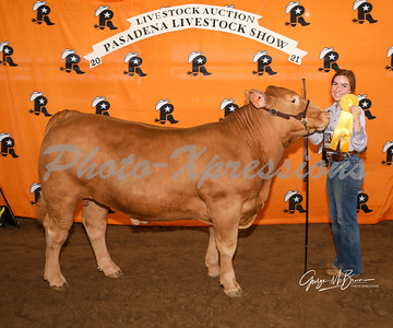 7th place steer_2818