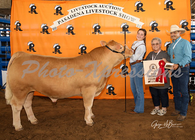 reserve champion steer_2804