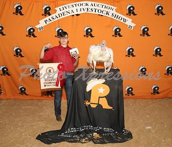 reserve champion turkey tom_2730
