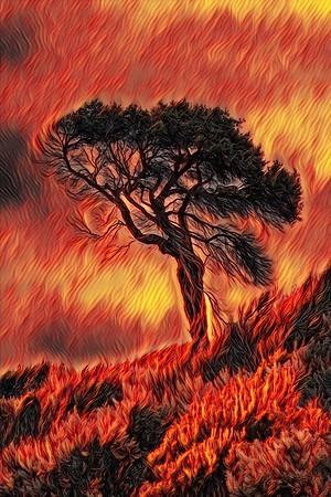 Lone Tree - burning bush