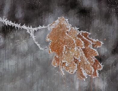 DA022,DA,Frosty Oak Impression