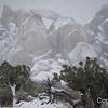 Snow Scene in Joshua Tree