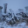 Snowfall in Joshua Tree National Park