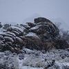 Blizzard in Joshua Tree National Park